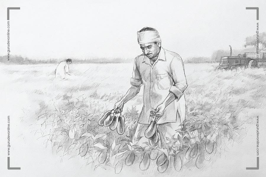 Gurudev works at the farm